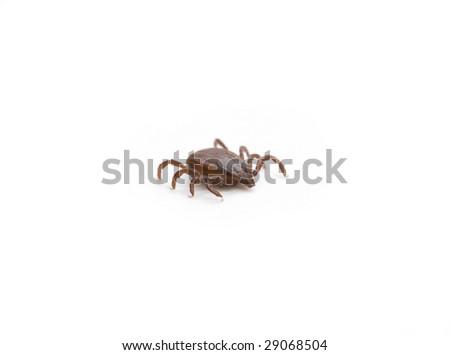 Tick on a white background - stock photo