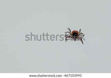 tick on white background above