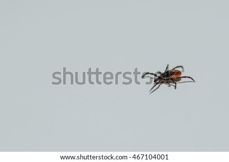 tick on white background right