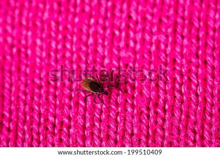 Tick - parasitic arachnid blood-sucking carrier of various diseases - stock photo