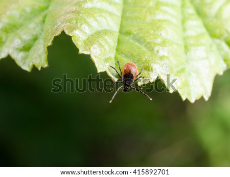 tick wants a ride - stock photo