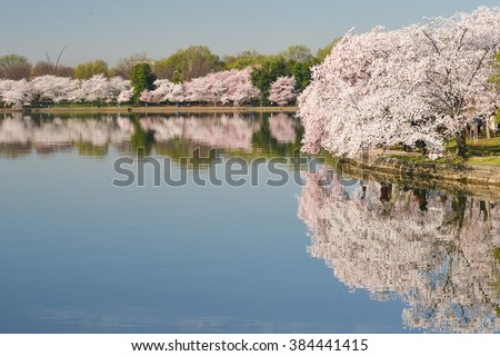 Tidal Basin during Cherry Blossom Festival - Washington DC United States  - stock photo