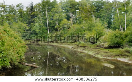 Tidal flow in slough from salt and fresh water river in Olympic Peninsula of Wa. State Rainforest.  Old growth cedar and fir trees hug the tidal river bank.  Low tide and late Spring colors. - stock photo