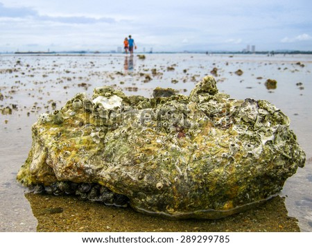 Tide pools on the beach are habitats of uniquely adaptable animals in Sattahip district, Thailand - stock photo