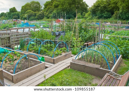 Tidy allotment garden with raised beds