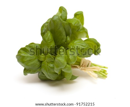 tied bunch of basil isolated on white background - stock photo