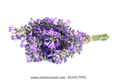 Tied bunch of lavender flowers on white background - stock photo