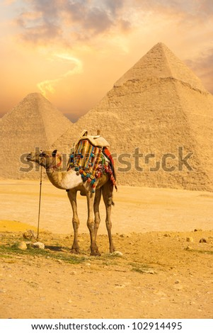 Tied camel with a colorful saddle waiting for its owner in front of the pyramids of Giza with an orange sunset sky in Cairo, Egypt. Vertical copy space - stock photo
