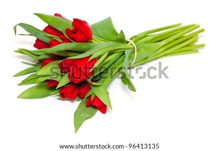tied red tulips isolated on white