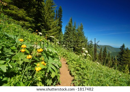 Tiger Lilies, Lilium columbianum , and Parsnip, in Olympic National Park - stock photo