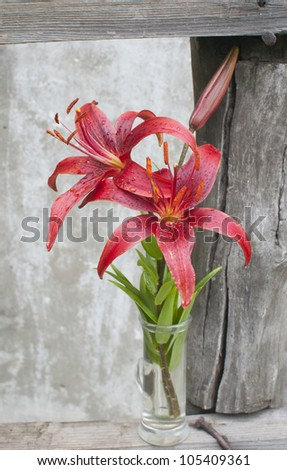 tiger lily bouquet at old wall