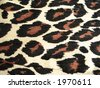 Tiger pattern for background - stock photo