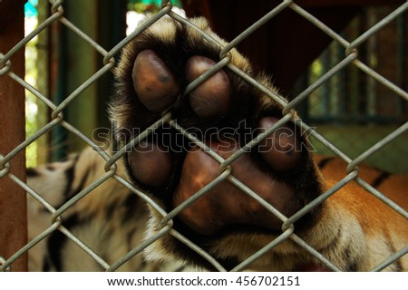 Tiger paw against fence