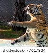 Tiger playing in water - stock photo