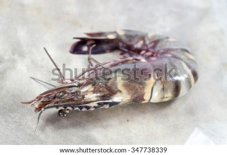 Tiger Prawn, Seafood Ingredient for dinner - stock photo