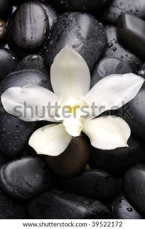 tiger's violet orchids and pebble with water drops