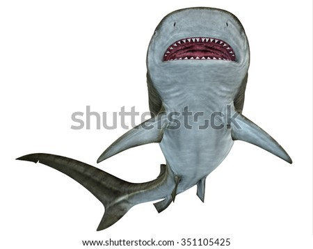 Tiger Shark Underside - The Tiger shark is a large predatory fish that lives in temperate and tropical ocean waters. - stock photo