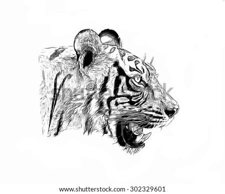 Tiger sketch - stock photo