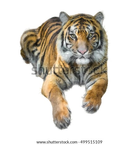 Tiger Sketch Graphic Art