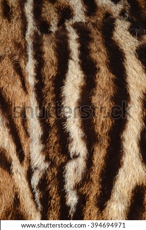 tiger skin background - stock photo