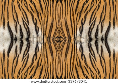 tiger skin texture. - stock photo