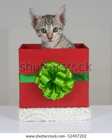 Tiger stripped kitten looking out from a gift box - stock photo