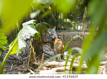 Tigress with cubs - stock photo