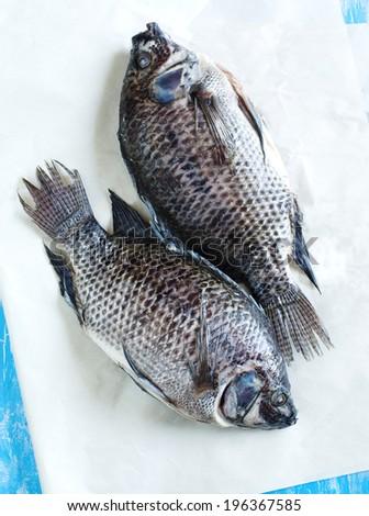 Tilapia fish - stock photo