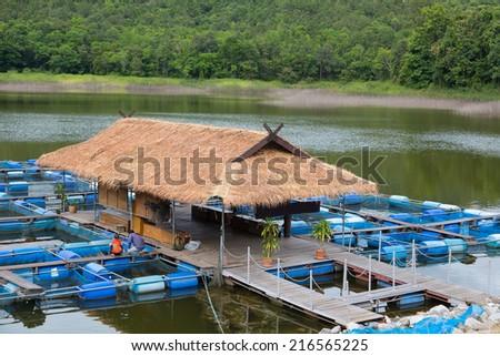 Tilapia fish farm in Thailand - stock photo
