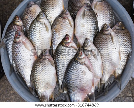 tilapia fishes at fresh-food market in thailand - stock photo