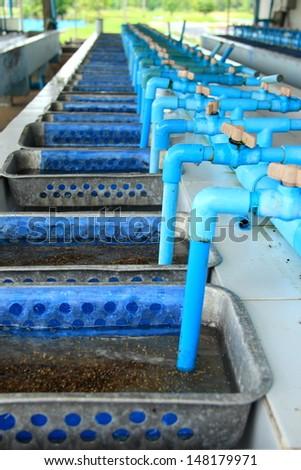 Tilapia hatchery equipment - stock photo