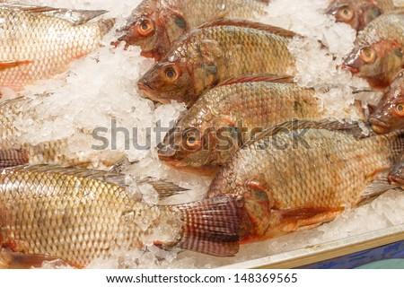 tilapia inside ice for sell - stock photo