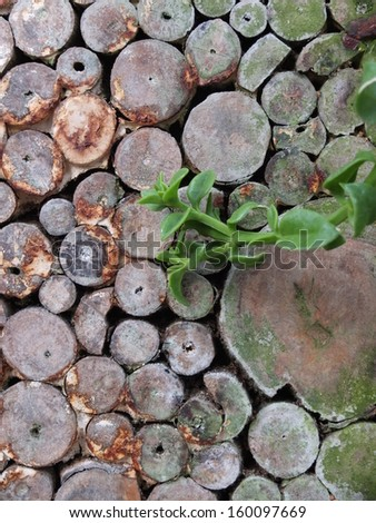 Tiles of Wood and Plant - stock photo