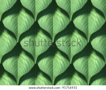 Tiling texture – Leaf - stock photo