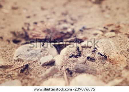 tilt shift of entrance to the ant's nest. - stock photo