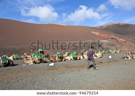 TIMANFAYA NATIONAL PARK, LANZAROTE, SPAIN - DECEMBER 26: camel rider waiting for tourists riding on camels through the famous Timanfaya National Park in December 26, 2010 in Lanzarote, Spain - stock photo