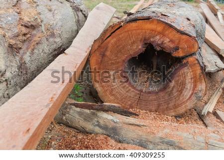 timber - stock photo