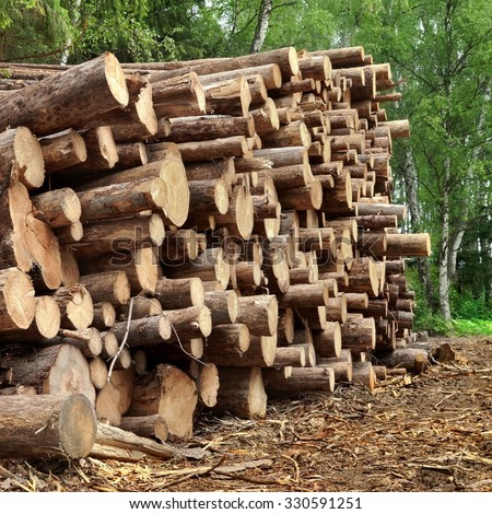 Timber Harvesting For Lumber Industry Or  Wooden Housing Construction Concept. Large Woodpile From Sawn Debarked Pine Wood Logs