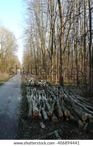 Timber harvesting. Pile of logs and lots of stumps in the wood-cutting area in the forest in early spring - stock photo