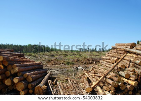 Timber Logs at Clear Cut - stock photo