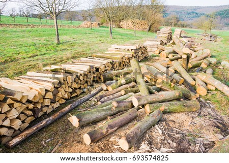 Timber logs on a lumberyard