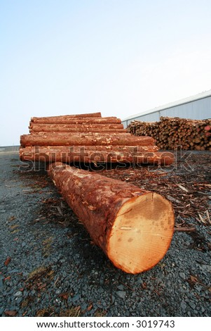 Timber (portrait) - stock photo