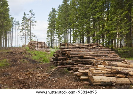 Timber Stack on clearcutting area - stock photo