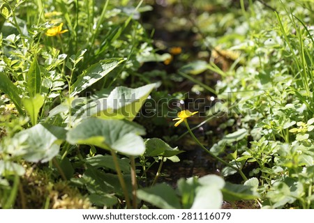 Timber swamp brook, water and bog plants - stock photo