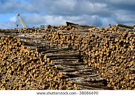 Timber yard - stock photo