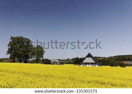 Timbered house with rape field in Lower Saxony, Germany, Europe - stock photo