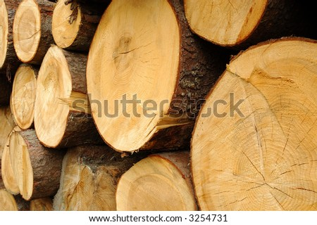 Timbers on wood stores,  close-up - stock photo