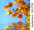 Time of autumnal coloration  foliage - stock photo
