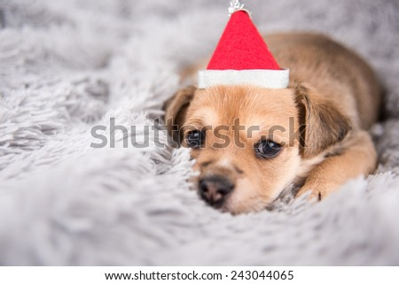 Tiny Adorable Puppy on Fluffy Gray Blanket Wearing Red Santa Hat - stock photo