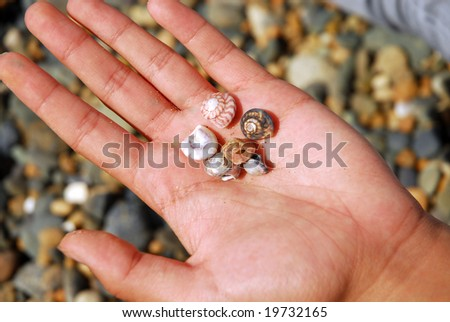 Tiny beach shells in a young girls hand with beach stones in background